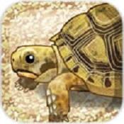 乌龟的育成