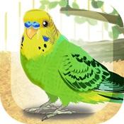 治愈的鹦鹉育成游戏(Parakeet)图标